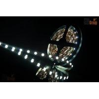 Открытая светодиодная лента SWG SMD3528, LED300CW, 24W, 12V, IP20, 5m